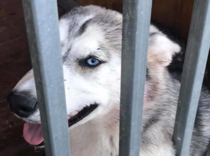 Poszukujemy właściciela lub nowego właściciela dla psa znalezionego w Łabędziach