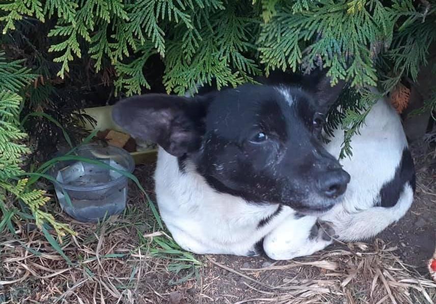 Uroczy psiak szuka domu