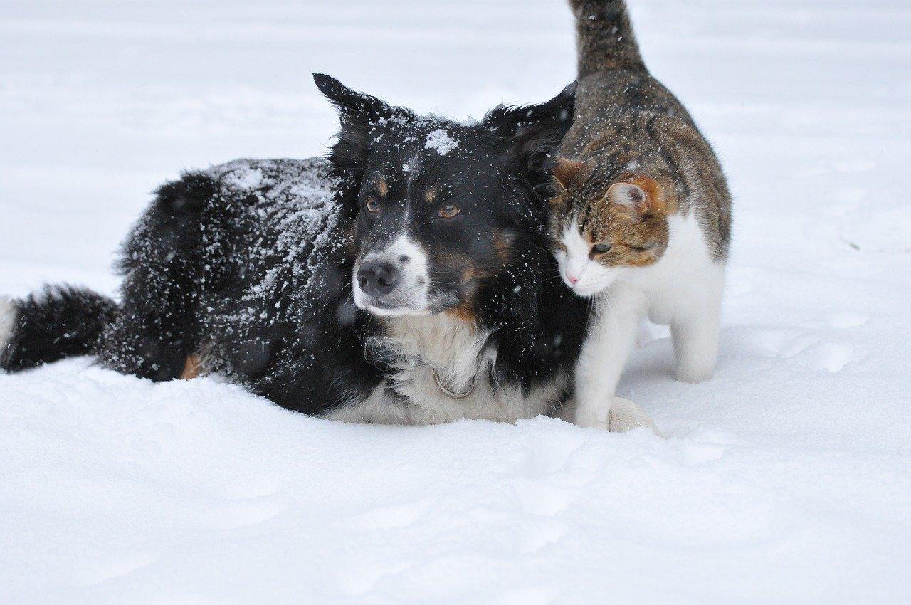 IMGW: Dbajmy o zwierzęta w czasie mrozów