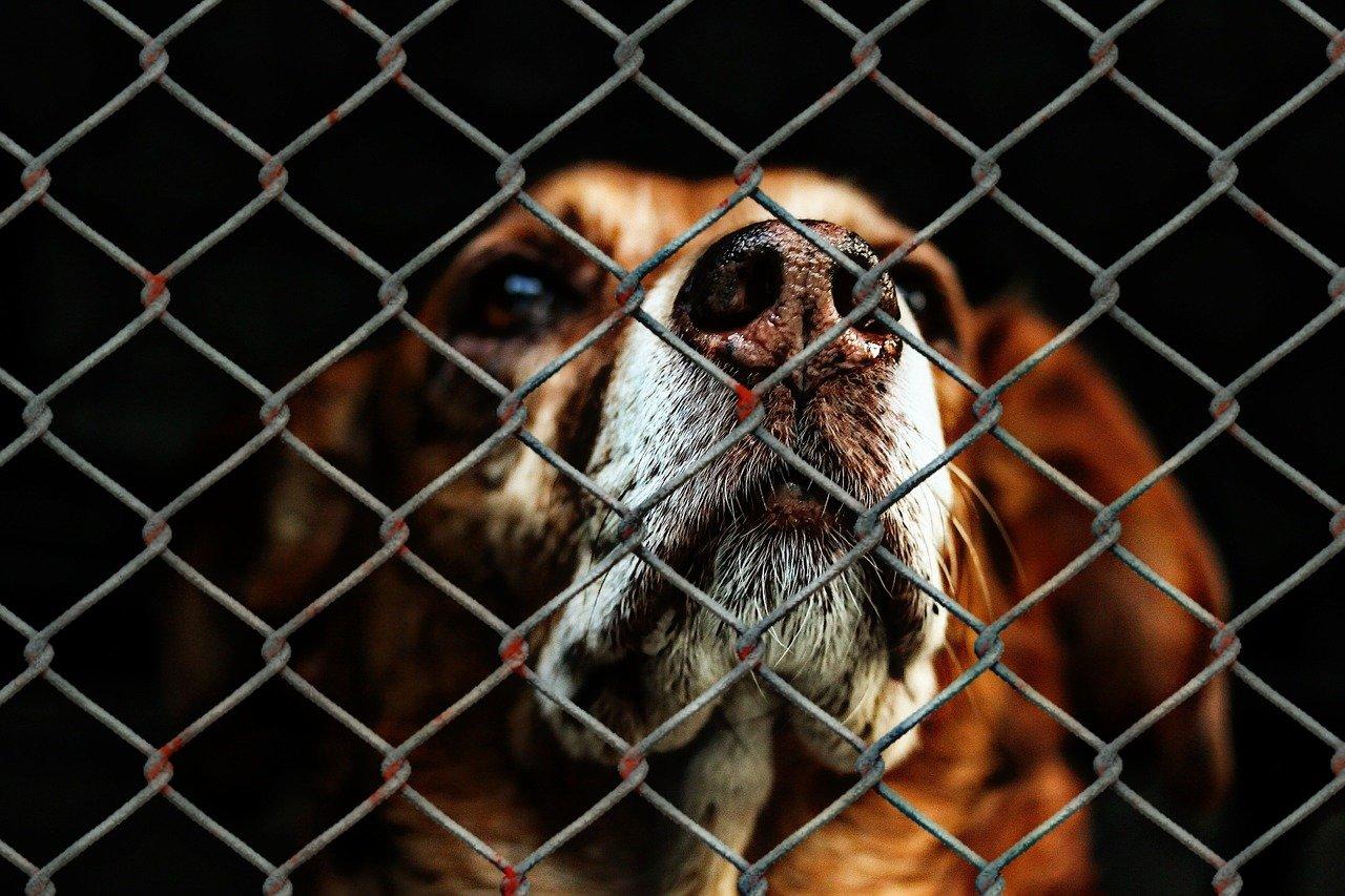 Uwaga! Zbiórka karmy dla psów