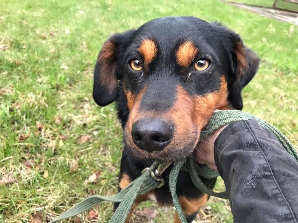 Drawsko Pomorskie - znaleziono psa