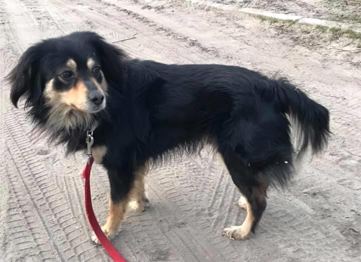 Drawsko Pomorskie - szukamy właściciela psa