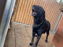 Pies poszukuje właściciela - Drawsko Pomorskie