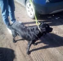 Znaleziono psa!! Suliszewo!!! Rzęśnica!!!