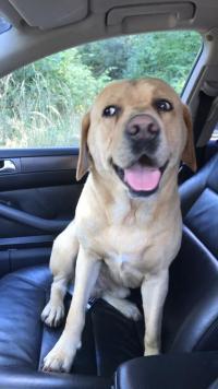 Znaleziono psa - Suliszewo - Gudowo - Drawsko